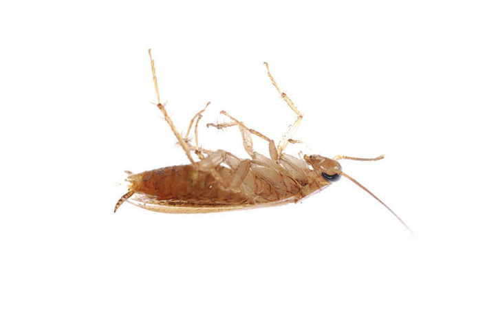Roach and Water Bug Control